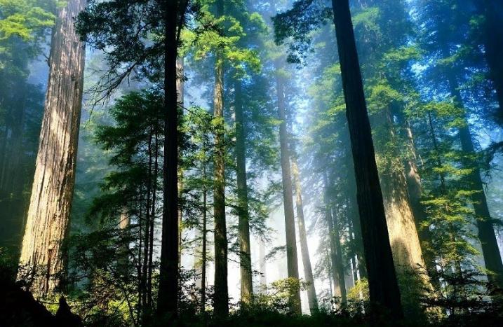 Gỗ tự nhiên là gì? Ưu nhược điểm và những ứng dụng của gỗ tự nhiên